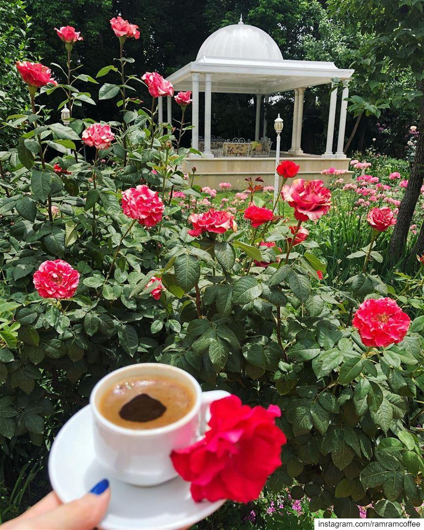 ولا شيء اسعد مني وانا معك الود ودي تكون انت من تشاركني قهوتي .....