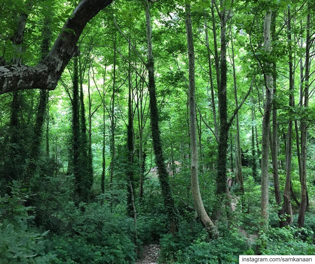 nature outdoors adventure hiking neverstopexploring letsgosomewhere ... (Hadchît, Liban-Nord, Lebanon)