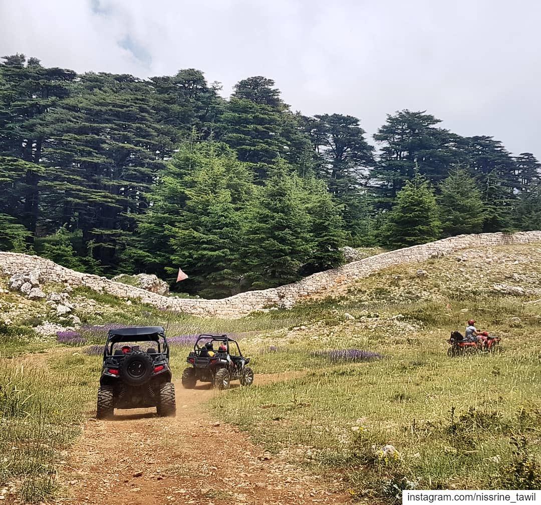 bcharre cedars lebanon atv outdoors activities northlebanon nature... (Arz Bcharé)