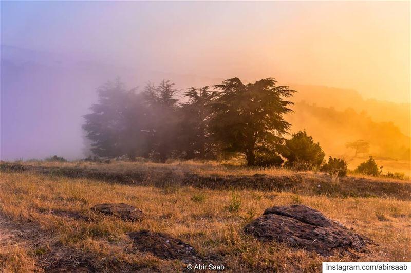 lebanon fog nature cedars livelovebeirut ig_lebanon insta_lebanon ... (Hadath Al Jubbah, Liban-Nord, Lebanon)