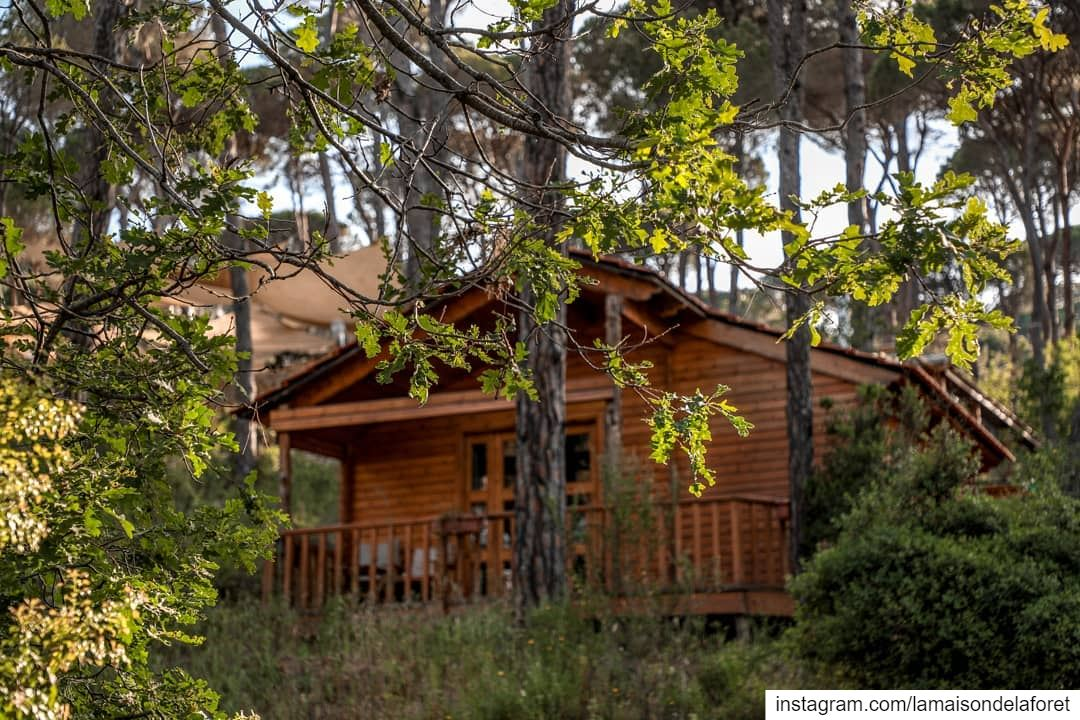 A summertime relaxing Forest break is surely needed 🏡☀️ ...