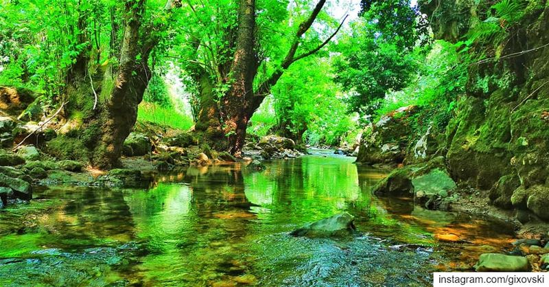 Only when you drink from the river of silence shall you indeed sing....... (Lebanon)