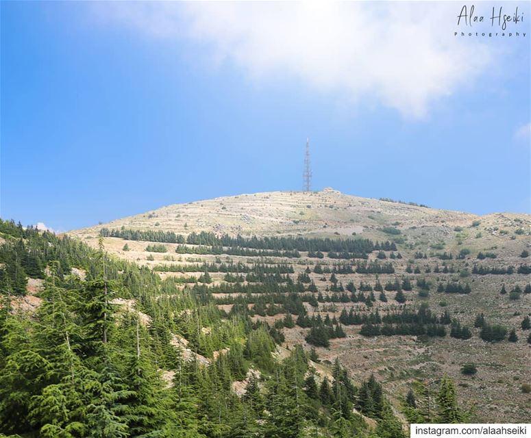 ALIVE ☀️... Hseiki Lebanon beirut nature photography cedars ... (Maaser El Shouf Cedar Reserve محمية ارز معاصر الشوف)