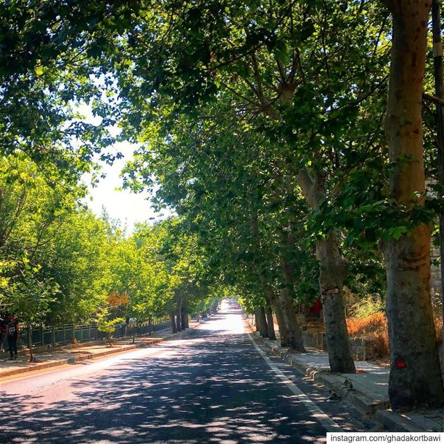 I found the road less travelled... it looks shady to me! 🤔........ (Sawfar, Mont-Liban, Lebanon)