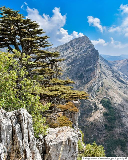 On the edge of the world 🏔🌲 - Tannourine Beautiful mountains ... (Arz Tannoûrîne)