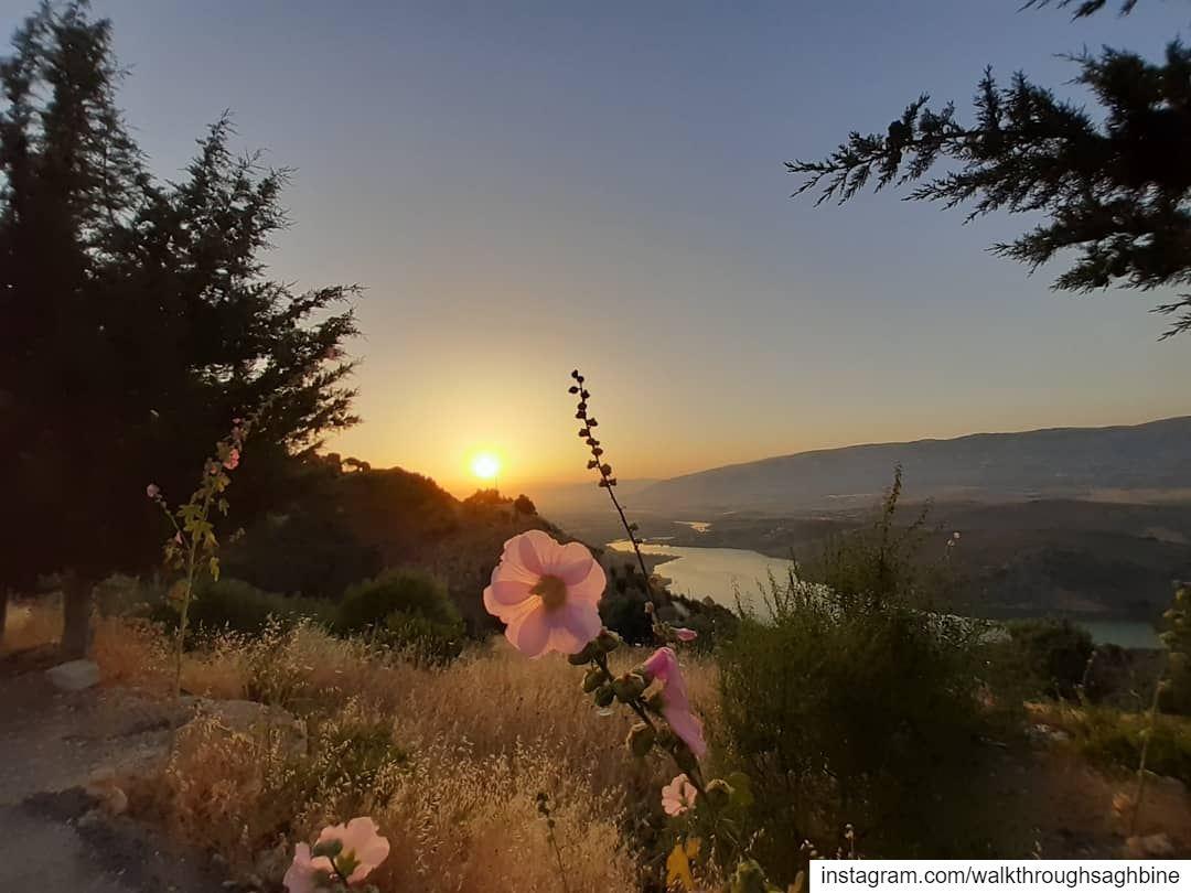 Weekend Getaway🌞🌸🌾 walkthroughsaghbine naturelove naturephotography ... (Saghbin, Béqaa, Lebanon)