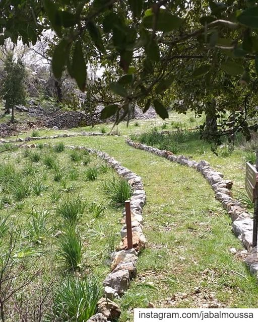 Hello July! JabalMoussa unesco unescomab livelovejabalmoussa ... (Jabal Moussa Biosphere Reserve)