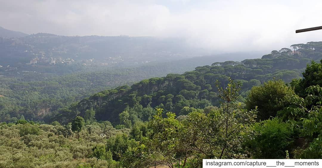 Adopt the pace of Nature: her Secret is Patience 🤩 nature beauty ... (Bkâssîne, Al Janub, Lebanon)