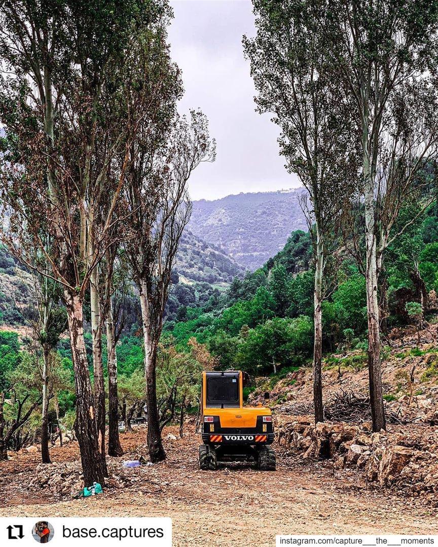 Repost @base.captures• • • • • • lebanon liban livelovechouf tree ... (`Ammatour, Mont-Liban, Lebanon)