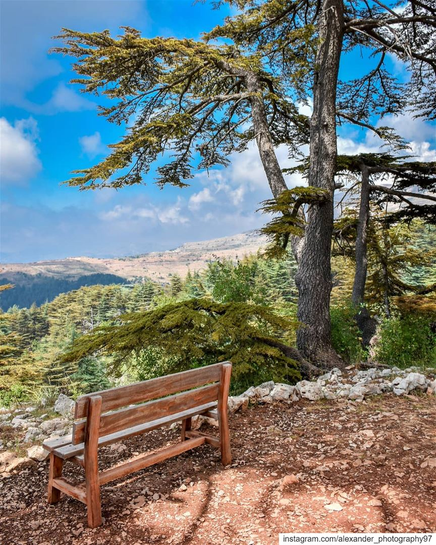 Let's take a rest and breathe some fresh air 🏔🌿 - Good morning from... (Arz Tannoûrîne)