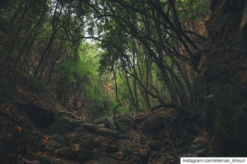 🌲 ᴍʏ ᴡɪsʜ ɪs ᴛᴏ sᴛᴀʏ ᴀʟᴡᴀʏs ʟɪᴋᴇ ᴛʜɪs, ʟɪᴠɪɴɢ ǫᴜɪᴇᴛʟʏ ɪɴ ᴀ ᴄᴏʀɴᴇʀ ᴏғ ɴᴀᴛᴜʀ (Enchanted Forest)
