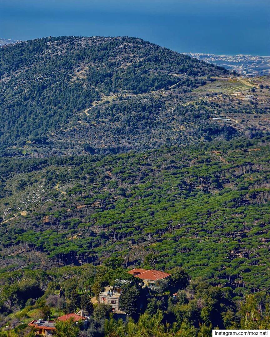 A green nature can be a medicine for our mind pain===================... (Jezzîne, Al Janub, Lebanon)