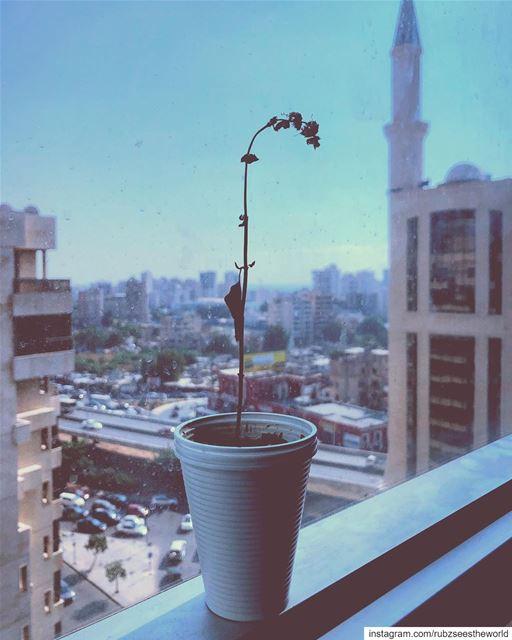 Beirut, Lebanon: lifeless yet full of life. rubzseestheworld ... (Beirut, Lebanon)