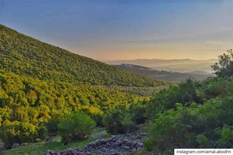 """""""لأن لي فيه شجرة وغيمة وظل وشمس تتوقد وغيوم تمطر الخصب… وجذور تستعصي على ال (South Governorate)"""