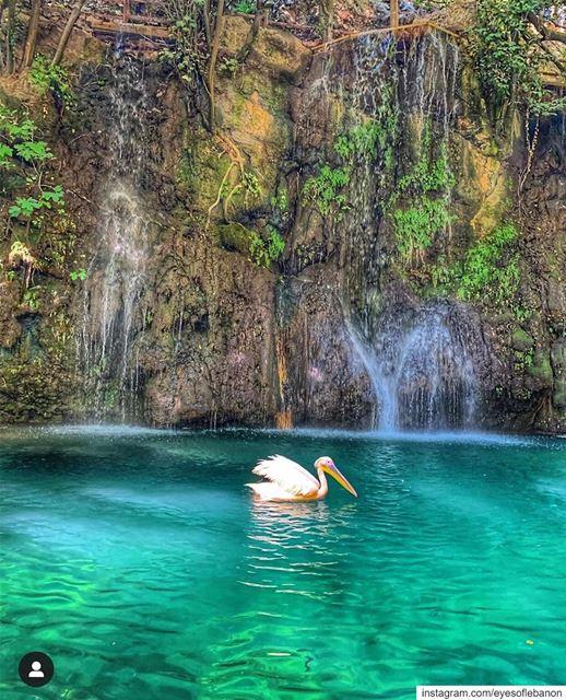 Good Morning from Baaklineصباح الخير من بعقلينCredits to @ifl85 ・・・... (Baakline, Mont-Liban, Lebanon)