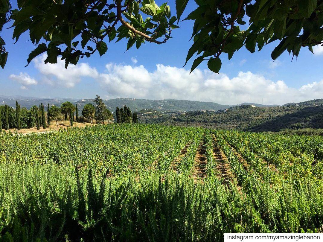 a7labaladbil3alam 🇱🇧..... photo photograph photography ... (Ixir Winery)