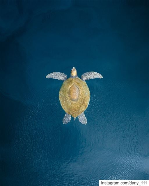 The flying turtle 🐢Photo taken with @djiglobal Phantom 4... (Batroûn)