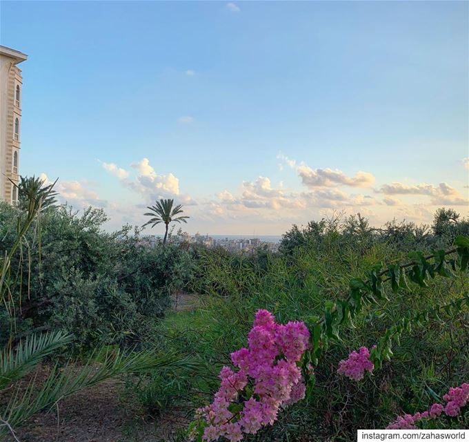 🌸🌺.. lebanon picoftheday instalebanon lebanese view landscape flowers... (Lebanon)