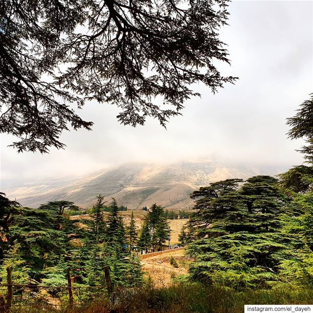 HEAVEN❤❤🇱🇧🇱🇧 cedars mountains treebranches naturelover ...