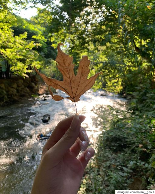 Nature is pleased with simplicity🍁  Today  Summer  River  Nature ...