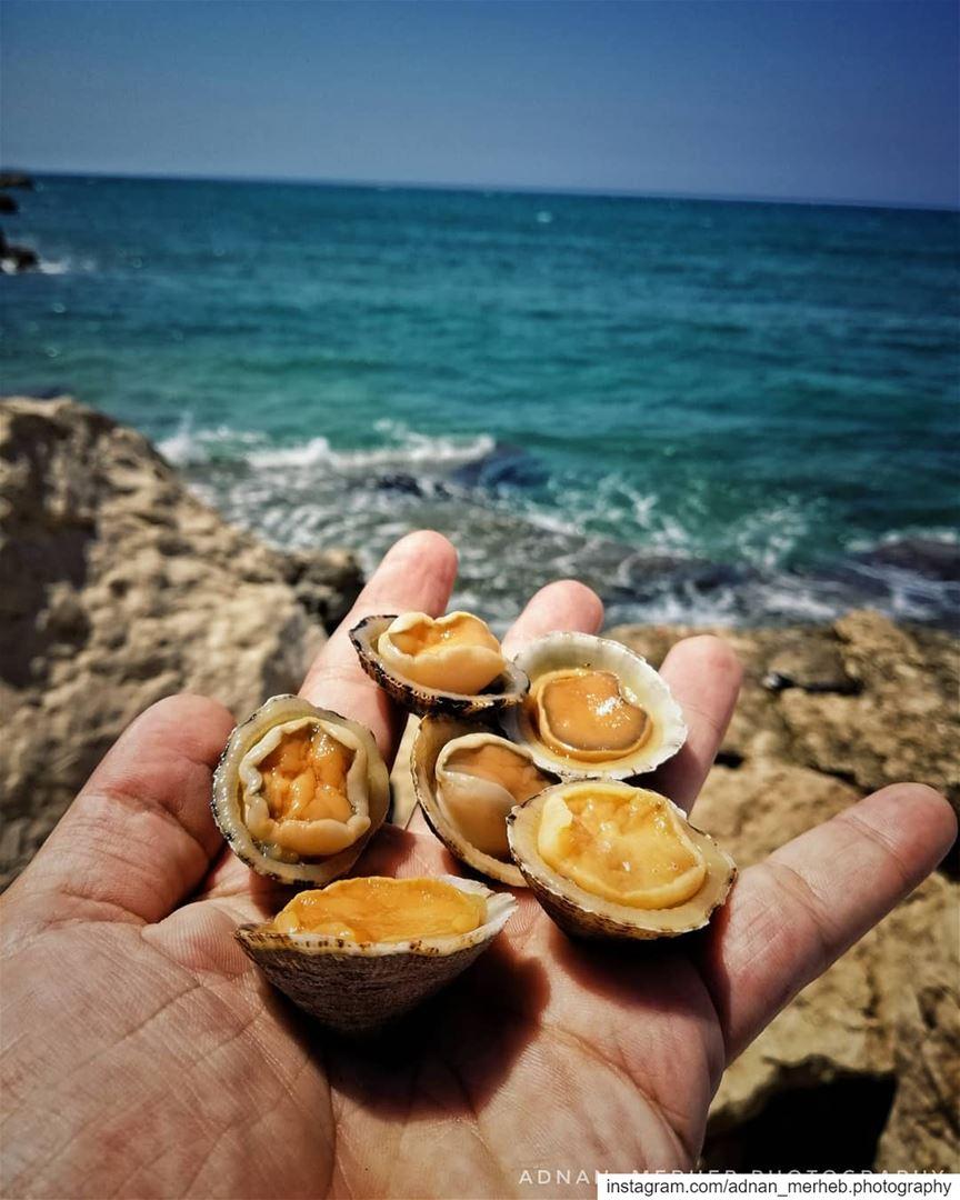 Sea food 😍🤤 wildlife nature wildlifephotography birds ... (Al Qalamoun)