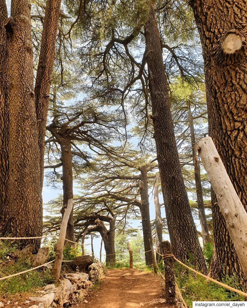 Lebanon is ❤❤🇱🇧🇱🇧 amazinglebanon lebanontourism beautiful view ...