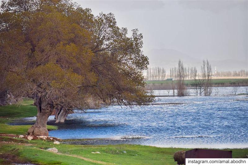 متى اتسعَ نطاقُ محبتِكَ اتسعَ نطاقُ الجمالِ في حياتِكَ... .... lebanon... (Beqaa Valley)