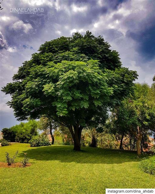 Ne porte pas la hache au pied de l'arbre qui t'a abrité pendant l'orage.... (USJ Campus Liban Nord)