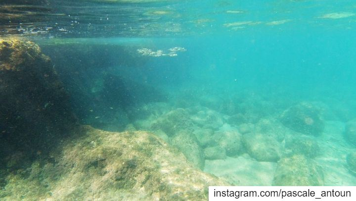 ✔I was planning for the past 2 weeks to have a new snorkel experience &... (Tahet el-rih تحت الرّيح)