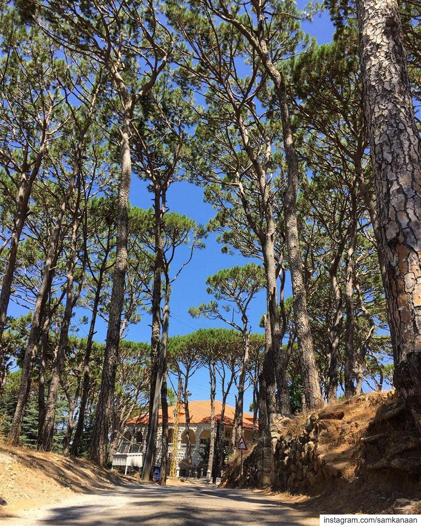 walk outdoors nature microadventure neverstopexploring ... (Falougha, Mont-Liban, Lebanon)