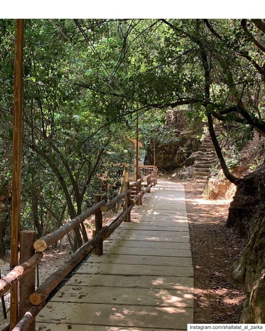 Pathway to heaven...Picture by : @liliane_maalouf .. roadtrip ... (Shallalat Al Zarka شلالات الزرقا)