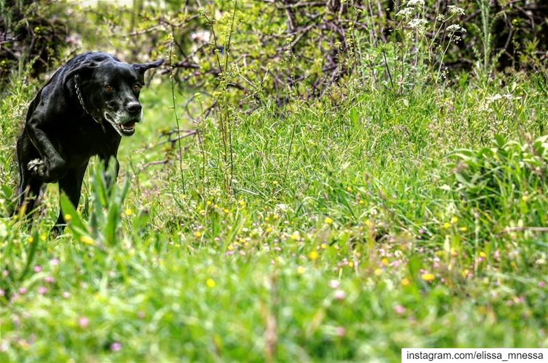 myblack بلاك ... picoftheday black green dogoftheday capture ... (Feitroun, Mont-Liban, Lebanon)