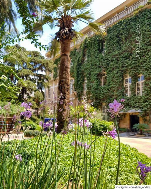 Ça recommence... 🌸@usjliban_________________________ nature ... (Université Saint-Joseph de Beyrouth - USJ)