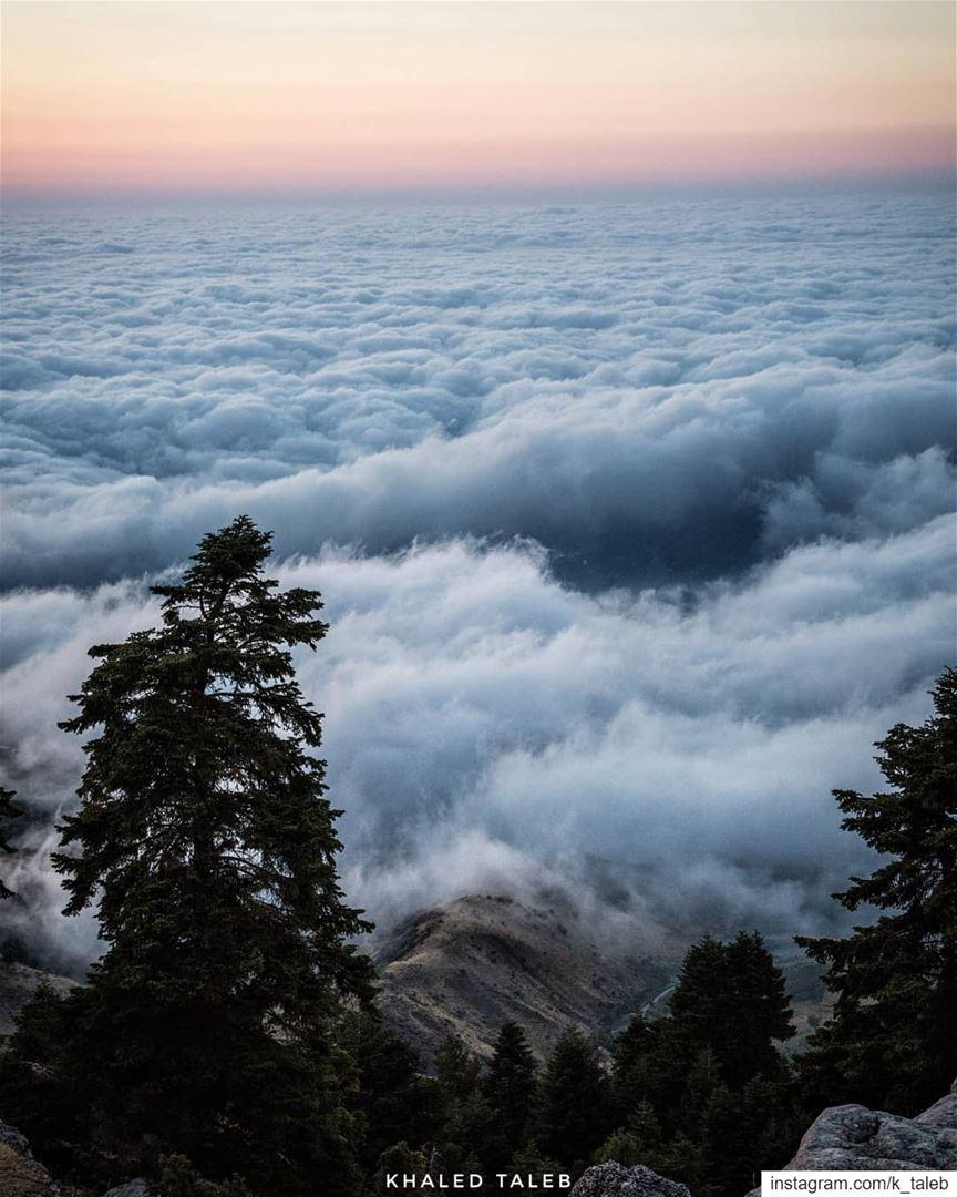 يُساهم قرب الساحل العكاري من الجبل بارتفاع نسبة الرطوبة، وبالتالي تشكل الضب