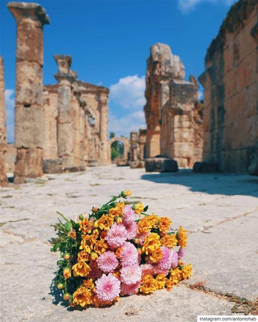 Blooming Hippodrome 🌸🐎 (Tyre, Lebanon)
