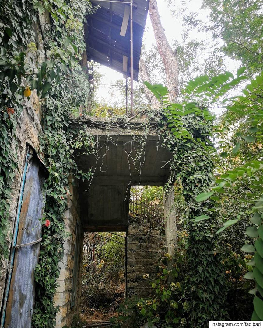 When nature keeps history evergreen... (Aïn Aâr, Mont-Liban, Lebanon)