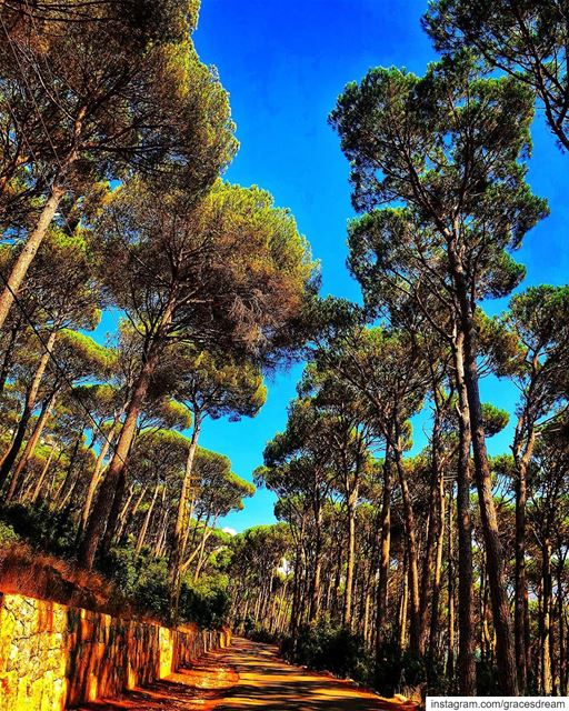 Trees 🌳 ...... Nature  NaturePhotography  NatureLover  NatureLovers... (Ra'S Al Matn, Mont-Liban, Lebanon)