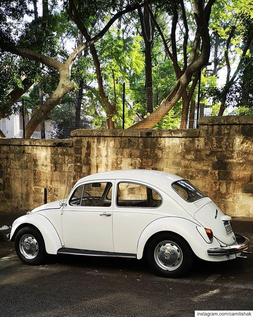 She is back 🐞 vw volkswagen beetle aircooled aircooled_society german... (Beirut, Lebanon)