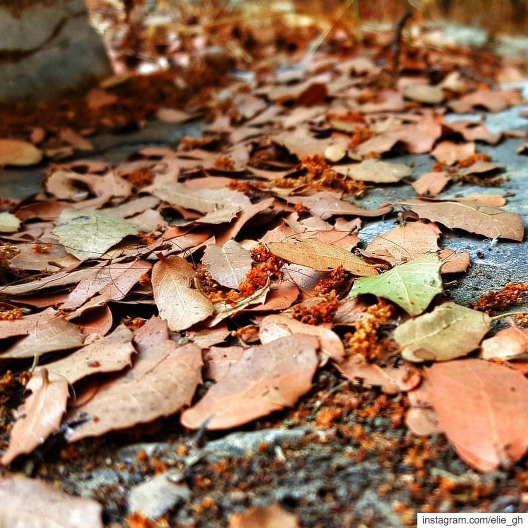 الورقة لما تمل من الشجرة .. بتحط الخريف حجة ... 🍂🍁...