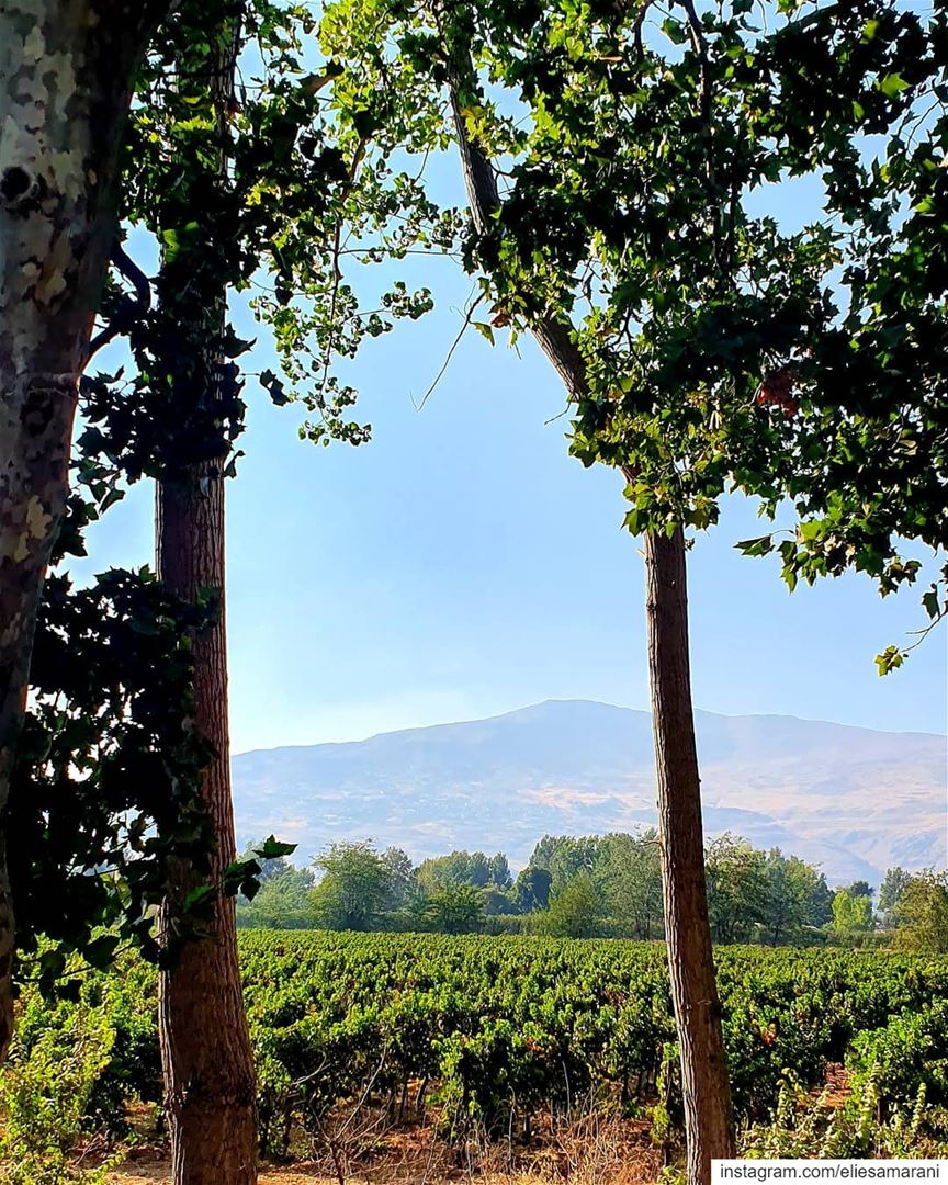 Earth and sky, woods and fields, the mountain and the sea, are excellent... (Deïr Taanâyel, Béqaa, Lebanon)