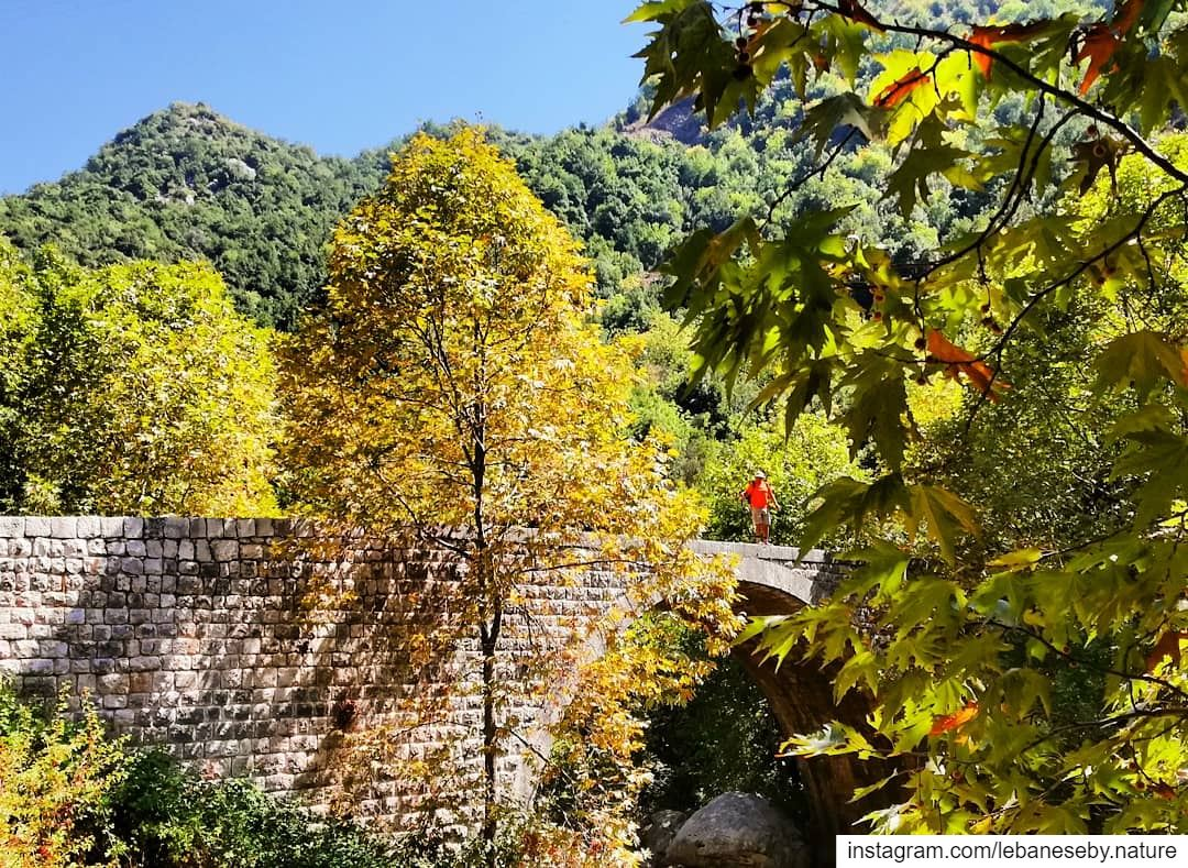 HelloOctober 🍁🍂.. fall automn landscape fallcolors leaves trees... (Wadi El Salib - Kfardebian)
