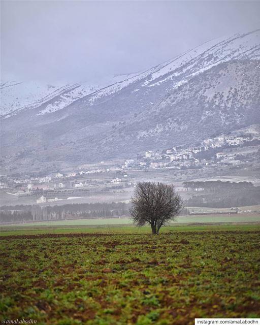 • السبيل الوحيد لمقاومة القدر هو الا تخافه •... lebanon photography ...
