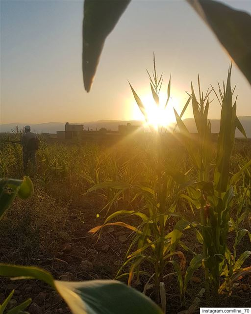 Sunsets, like childhood, are viewed with wonder not just because they are... (El Kaa, Béqaa, Lebanon)