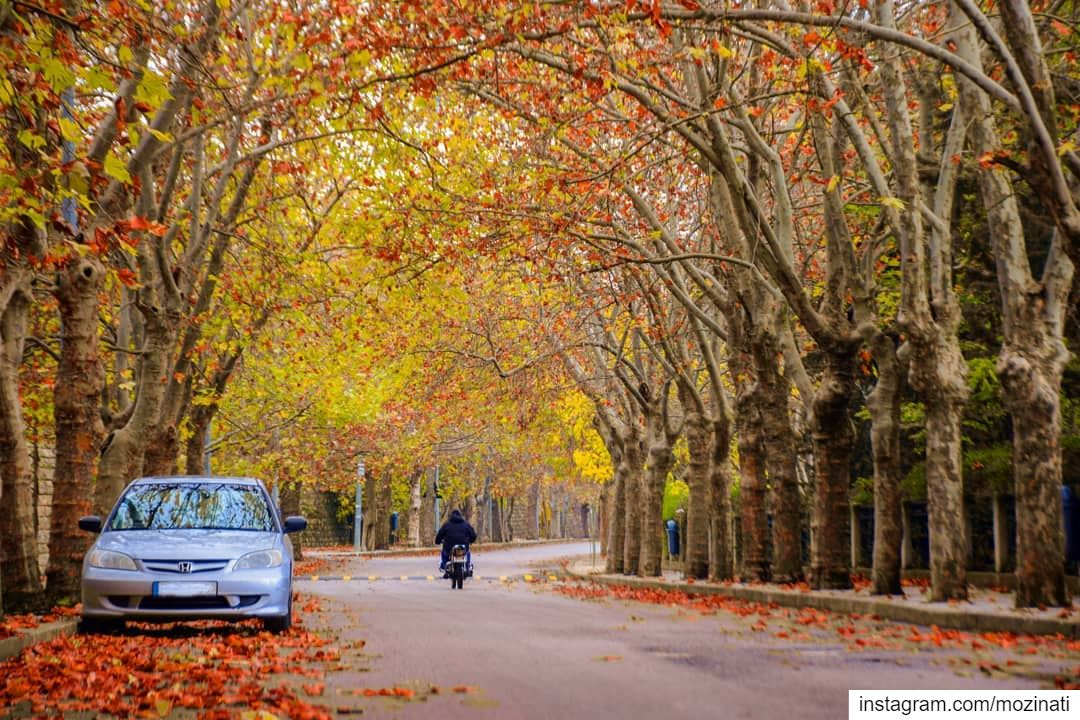 Autumn carries more gold in its pocket than all the other seasons.. 🍂🍂 == (Sawfar, Mont-Liban, Lebanon)