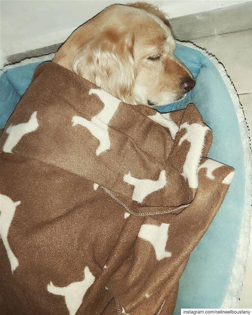 Ugh Monday... Go away! 🐾😴💤 mydog honey lebanon petsofinstagram ...