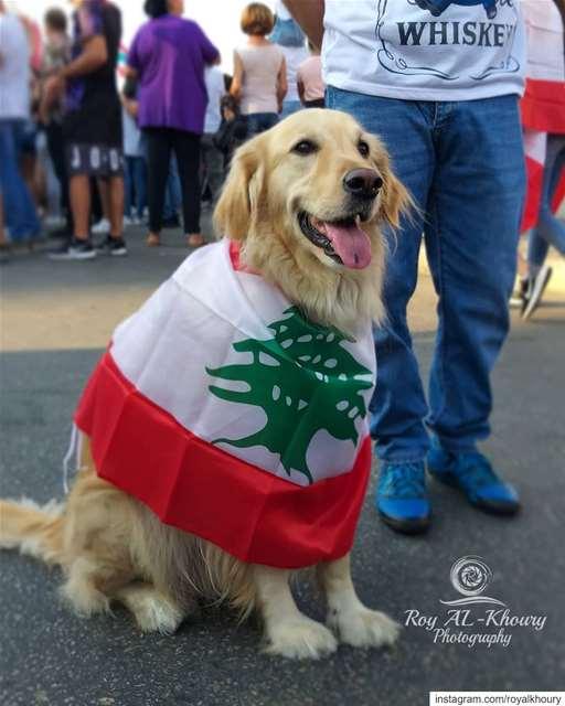 zgharta LebaneseRevolution Lebanon LovelyDog RoyALKhouryPhotography (U (Zgharta)