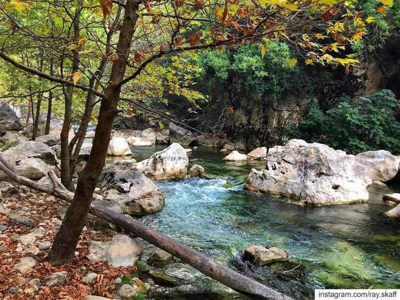 Autumn vibes‼️..@decathlonleb allmotivated................ (Lebanon)