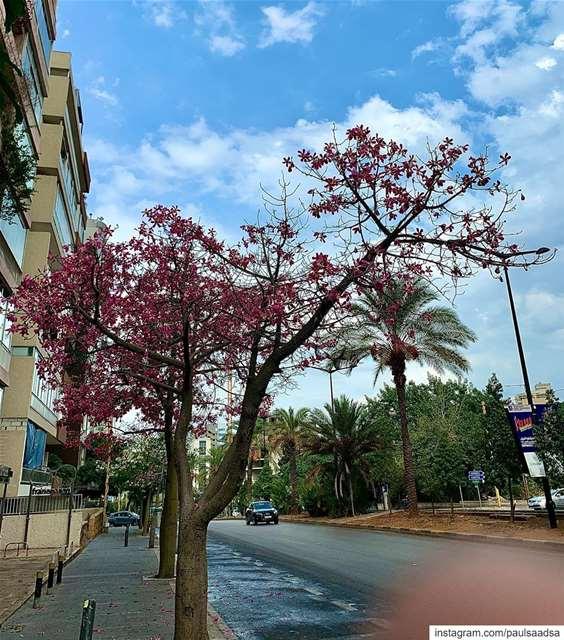 beirut lebanon lebanonfashion beiruting trees ... (Furn El Chouback)