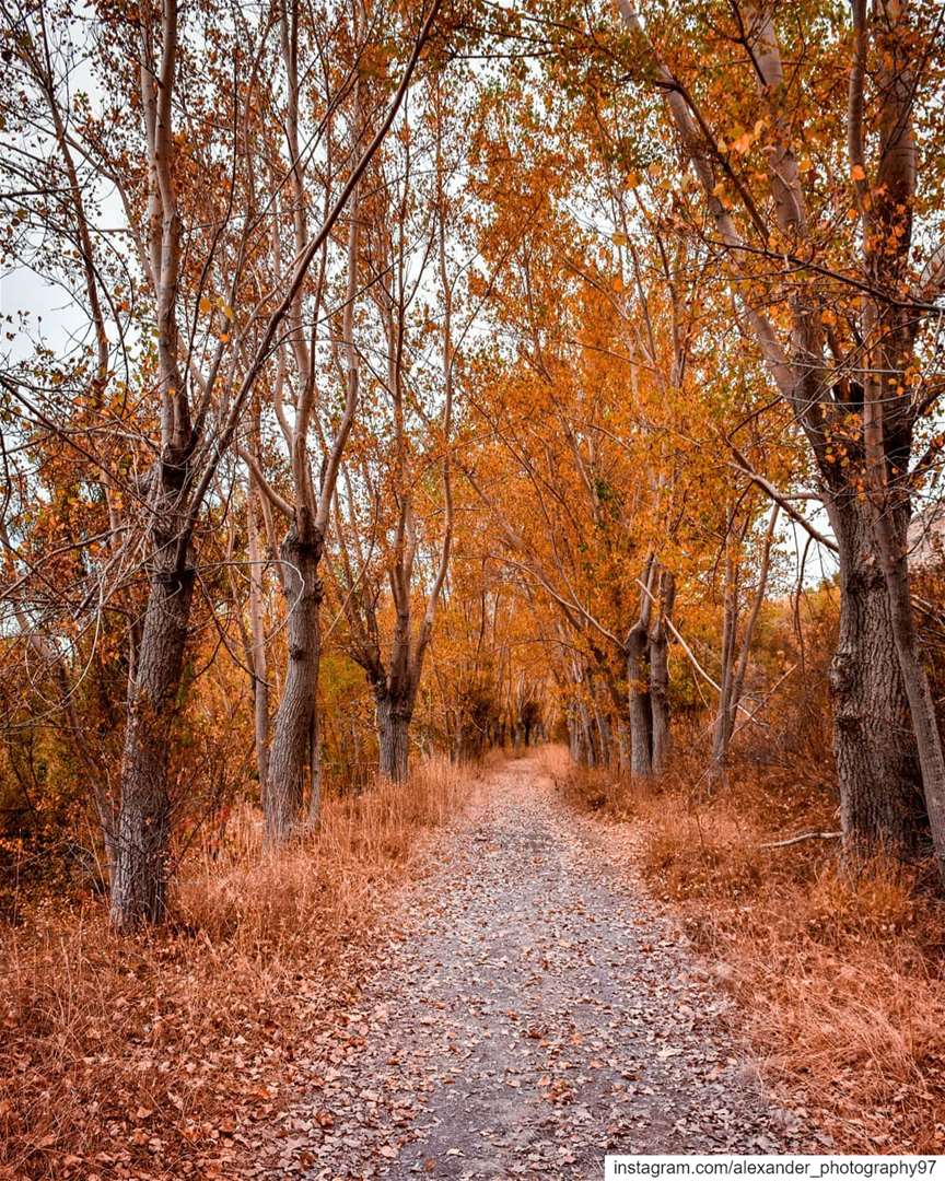 Lebanon's Golden Nature 🇱🇧🍁🍂Laklouk Autumn walk - Never ending beauty� (El Laklouk, Mont-Liban, Lebanon)