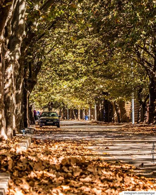 For Autumn reveals the spirit of life, with which everything grows back... (Sawfar, Mont-Liban, Lebanon)